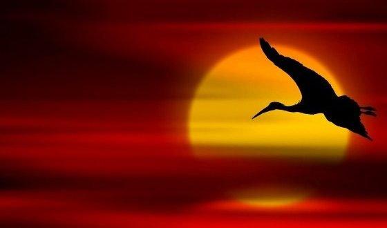 bird_sunset-560x330