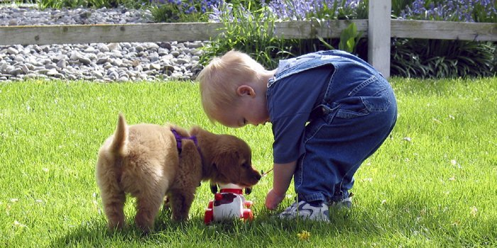 toddler-dog-labradorpuppy1-700px350px