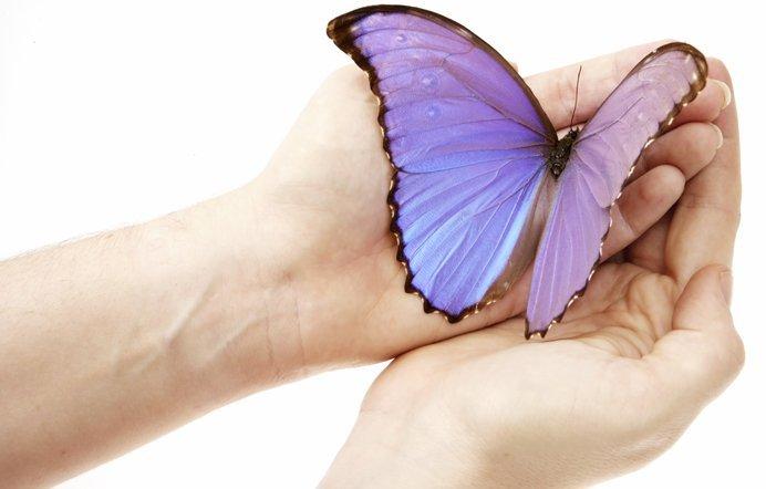 butterfly_website